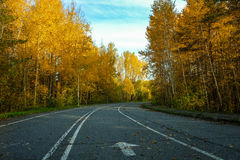 Road for running with nobody in autumn park. In morning Royalty Free Stock Photos