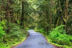 Road running in temperate rainforest of Oregon coast USA Stock Photos