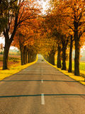 Road running through tree alley. Autumn Royalty Free Stock Photography