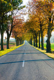 Road running through tree alley. Autumn Stock Image
