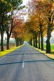 Road running through tree alley. Autumn Stock Image