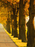 Road running through tree alley. Autumn Stock Images