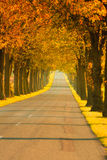 Road running through tree alley. Autumn Royalty Free Stock Photo