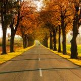 Road running through tree alley. Autumn Stock Photo