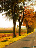 Road running through tree alley. Autumn Royalty Free Stock Images