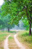 Road running between green trees in summer Royalty Free Stock Photos