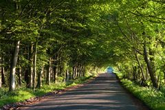 Road running through tunnel of green trees. A road running through a tunnel of green trees on a summer afternoon Royalty Free Stock Photography