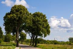 The road runs between old poplars. Stock Image