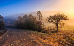 Road in rural area at sunrise Stock Image