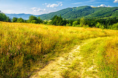 Road through a rural meadow on the hillside. Rural landscape. road through a large grassy meadow on hill side with some trees stock photos