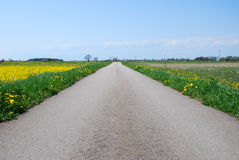 Road in a rural at spring landscape Royalty Free Stock Photo
