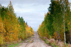 Road in russian taiga Royalty Free Stock Photo