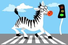 Road safety zebra vector illustration