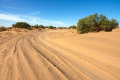 Road in sand and trees in desert stock photos