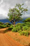 Road and Sausage tree Kigelia africana in Tanzania, Africa. African dirt road and big sausage tree Kigelia africana is a typical plant in tropical Africa shown Royalty Free Stock Photos