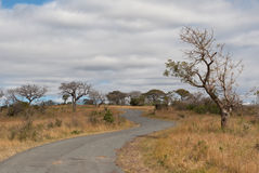 Road in savanna. African road in savanna, National Park, South Africa Royalty Free Stock Image