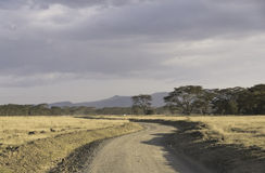 road by savanna Royalty Free Stock Photos