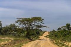 Road by savanna Royalty Free Stock Photo
