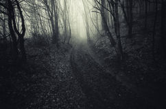 Road in scary haunted forest with fog Stock Photography