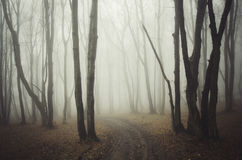 Road through scary mysterious forest with fog on Halloween Royalty Free Stock Photo