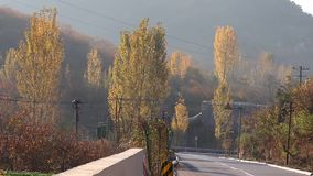 Road scenery in autumn. The woods turned golden and the cars were on the road. Very beautiful scenery stock video