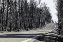 Road through scorched earth. And forests, left behind by tragic wildfires in Catalonia, in the municipality of Biure, Spain Royalty Free Stock Images