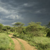 Road through the serengeti reserve Stock Photos