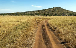 Road in the serengeti Stock Image