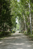 Road with seringueira or rubber tree plantation tunnel Royalty Free Stock Photos