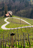 Road in a shape of a heart, Maribor Stock Photo
