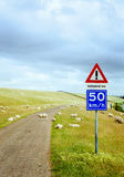 Road with sheep Royalty Free Stock Photos