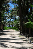 Road Sheltered by Palm Trees Stock Image