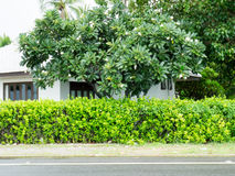 Road and shrubbery tree Royalty Free Stock Images