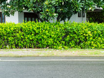 Road and shrubbery tree Stock Photography