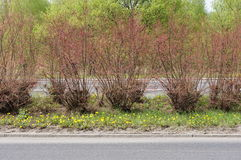 Road shrubs Royalty Free Stock Photos