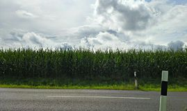 Road Side. With corn field in background Stock Photo