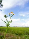 Road side flower under cloudy blue sky Stock Photography