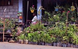 Road side nursery shop Royalty Free Stock Image