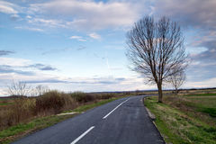 Road side tree Royalty Free Stock Image