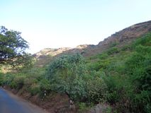 Road side view of trees and hills mountains. Lots of trees and plants greenery in the forest royalty free stock image