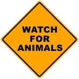 Road Sign. Orange road sign watch for animals -illustration Royalty Free Stock Image