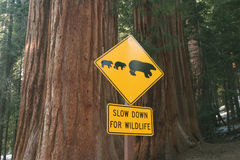 Road sign for bears Royalty Free Stock Photography