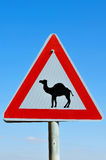 Road Sign - Beware Camel Crossing. Camel road sign warning drivers to beware of camels crossing the road Stock Image