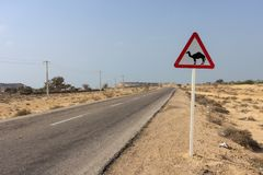 Road sign: Beware of camels. Funny and unusual road sign in iranian desert. Road sign with camel silhouette on a rural road in the middle of the desert Royalty Free Stock Photos