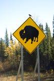 Road sign of buffalo Royalty Free Stock Photo