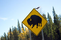 Road sign of buffalo Stock Images