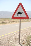 Road sign with camel. A triangular road sign with camel Royalty Free Stock Photo