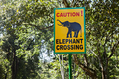 Road sign  elephant crossing Stock Images