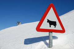 Road sign. In a snowy landscape Stock Photos