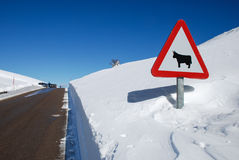 Road sign. In a snowy landscape Stock Photography